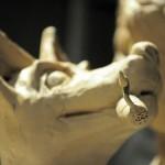clay-faces-dog