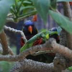 parrots-peeking